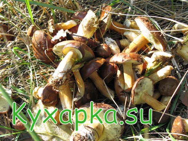 Кто завтра за грибами в лес