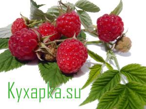 Как заготовить летний растительный чай из малины на даче